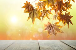 Rustic autumn backdrop Stock Photography