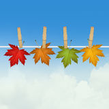 Autumn leaves hanging. Illustration of autumn leaves hanging Royalty Free Stock Photography