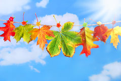 Autumn leaves hanging on a rope against blue sky Royalty Free Stock Photo