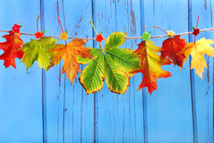 Autumn leaves hanging on a rope against blue wooden background Stock Photos