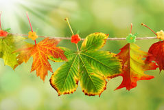 Autumn leaves hanging on a rope in a park Royalty Free Stock Image
