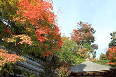 Autumn leaves in Hasedera Royalty Free Stock Photos