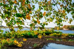 Autumn leaves hdr. South spring mood leaves nature Stock Image
