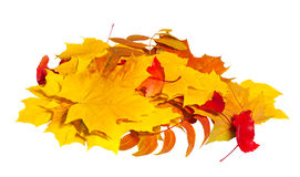 Autumn leaves in heap royalty free stock images