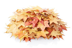 Autumn leaves heap Royalty Free Stock Photography