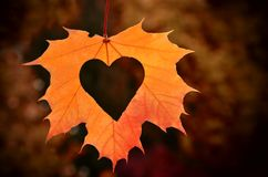 Autumn leaves with Heart. Stock Photos