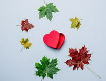 Autumn leaves and heart shape box gift Stock Photos