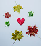 Autumn leaves and heart shape gift Stock Photos