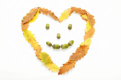 Autumn leaves heart shaped face. A heart shaped face of yellow, orange and brown oak leaves with acorns for eyes, nose and mouth Royalty Free Stock Photos