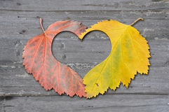 Autumn leaves with heat Stock Photo