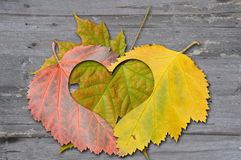 Autumn leaves with heat Royalty Free Stock Images