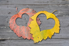 Autumn leaves with heat Stock Image