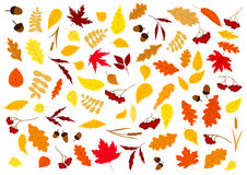 Autumn Leaves, Herbs, Berries And Acorns Royalty Free Stock Images