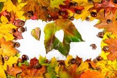 Autumn Leaves Het hart van de herfstbladeren De bladeren van de herfst op witte achtergrond De bladeren van de kleurenherfst De h Royalty-vrije Stock Foto