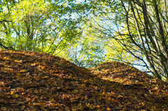 Autumn leaves hill Stock Images