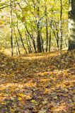 Autumn leaves hill Stock Photos