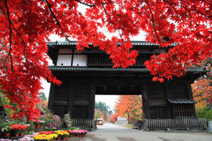 Autumn leaves at Hirosaki park in Aomori, Japan Stock Image