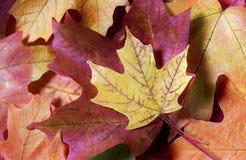 Autumn Leaves-hoogtepunt van Kleuren stock afbeelding