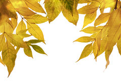 Autumn leaves.Horizontal view. Autumn leaves isolated over white background.Horizontal view Royalty Free Stock Image