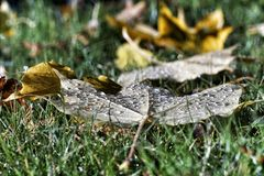 Autumn Leaves humide Image libre de droits