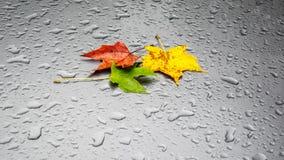 Autumn Leaves humide Photos libres de droits