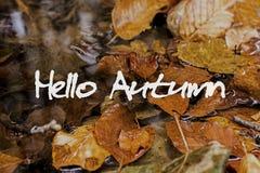 Autumn Leaves i bäck Hello Autumn Concept Wallpaper Arkivfoton