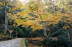 Autumn Leaves i Momijidani parkerar royaltyfria bilder