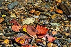 Autumn Leaves i vatten på flodbanken arkivfoto