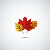 Autumn leaves icon background Stock Photos