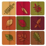 Autumn leaves icon. Red, yellow and green leaves of forest trees. Are used as buttons for web design Stock Images