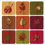 Autumn leaves icon. Red, yellow and green leaves of forest trees. Are used as buttons for web design Stock Photography
