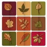 Autumn leaves icon. Red, yellow and green leaves of forest trees. Are used as buttons for web design Royalty Free Stock Image