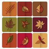 Autumn leaves icon. Red, yellow and green leaves of forest trees. Are used as buttons for web design Stock Photos