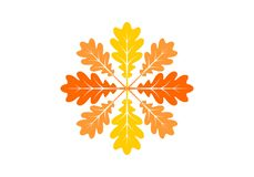 Autumn leaves icon. Vector illustration. Autumn leaves icons or logos in modern line style. Vector illustration on a white background royalty free illustration