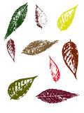 Autumn Leaves II. Grunge elements - Autumn Leaves II.   Highly Detailed vector grunge elements Stock Photo
