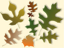 Autumn Leaves Illustration. Assorted autumn leaves on a white isolated background Royalty Free Stock Photos