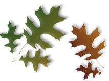 Autumn Leaves Illustration. An illustration of colorful autumn leaves on a white background Stock Image