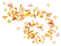 Autumn leaves illustration Stock Images