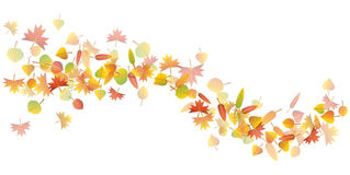 Autumn leaves illustration Stock Photography
