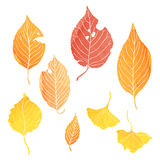 Autumn leaves. Illustrations by watercolor paint Stock Photo