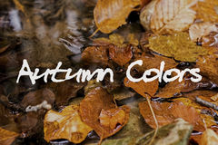 Autumn Leaves im Bach Autumn Colors Concept Wallpaper Lizenzfreies Stockbild