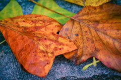 Autumn leaves. Image of some autumn leaves Stock Images