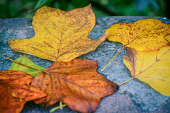 Autumn leaves. Image of some autumn leaves Stock Photos