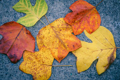 Autumn leaves. Image of some autumn leaves Royalty Free Stock Photo