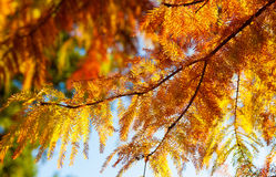 Autumn leaves. Image of some autumn leaves Stock Photo