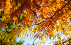 Autumn leaves. Image of some autumn leaves Royalty Free Stock Images
