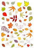 Autumn leaves and inflorescences Stock Photos