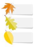 Autumn Leaves Infographic Templates per l'affare Fotografia Stock Libera da Diritti