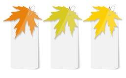Autumn Leaves Infographic Templates per l'affare Immagine Stock