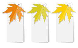 Autumn Leaves Infographic Templates pour des affaires Image stock